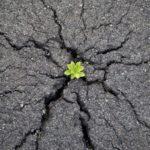 Hay vida debajo del asfalto. Solo hace falta regar un poquito.